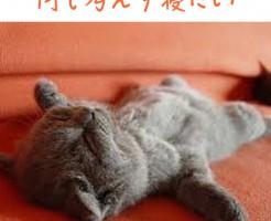 寝て疲れを解消したい